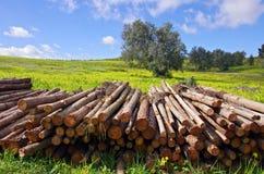 Pila de troncos Fotografía de archivo