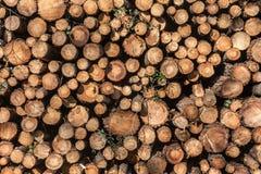 Pila de troncos de árbol Imagen de archivo libre de regalías