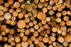 Pila de troncos derribados listos para ser cargado Imagen de archivo libre de regalías