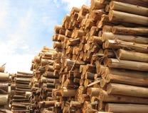 Pila de troncos para el papel Imagen de archivo libre de regalías