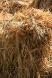 Pila del grano Fotografia Stock Libera da Diritti