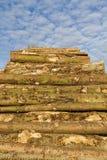 Pila del legname Fotografia Stock