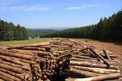 Pila del madera-registro del pino en la plantación Foto de archivo libre de regalías