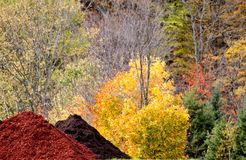 Pila del pedazo de Autumn Colors y de madera Foto de archivo libre de regalías