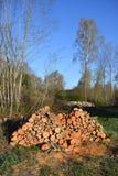 Pila del registro de la leña del aliso en primavera temprana Foto de archivo libre de regalías