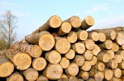 Pila del registro de la madera Fotos de archivo