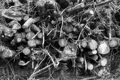 Pila del registro del bosque Imagenes de archivo