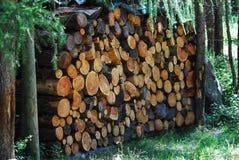 Pila dell'albero Fotografia Stock