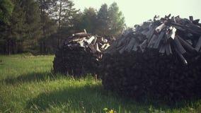 Pila della legna da ardere nella foresta stock footage