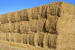 Pila di balle di fieno in un campo, Inghilterra. Immagine Stock