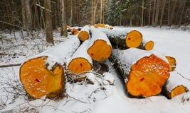 Pila di ceppi dell'albero di ontano sotto neve Fotografie Stock