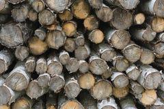 Pila di ceppi della betulla Fotografie Stock Libere da Diritti