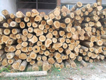 Pila di ceppi 2 di legno Fotografia Stock