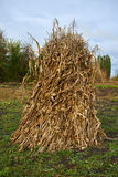 Pila di cereale nel giardino Fotografia Stock Libera da Diritti
