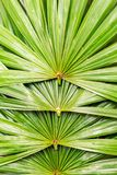 Pila di foglia di palma verde immagini stock libere da diritti