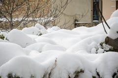 Pila di forma della nuvola di neve sopra l'albero del legno di bosso fotografia stock