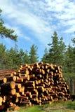 Pila di legname tagliato del pino nella foresta di estate Immagine Stock Libera da Diritti