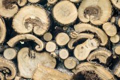 Pila di legno curvo unico fresco Immagini Stock