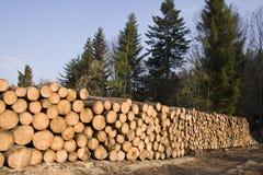 Pila di legno dell'albero di pino in foresta Fotografia Stock