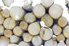 Pila di legno di betulla Fotografia Stock