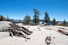 Pila di legno morto alla base di sotto cupola accanto alla mezza cupola in parco nazionale di Yosemite in California Fotografia Stock