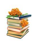 Pila di libri e di bacche di sorbo su un backgr bianco Immagine Stock
