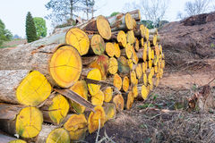 Pila di Loggging degli alberi Fotografia Stock