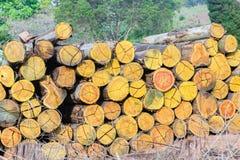Pila di Loggging degli alberi Fotografia Stock Libera da Diritti