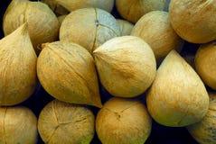 Pila di noci di cocco Fotografia Stock Libera da Diritti
