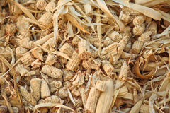 Pila di pannocchie e di foglie asciutte del cereale Fotografia Stock