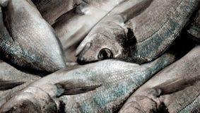 Pila di pesce del branzino Fine in su Fotografie Stock