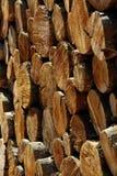 Pila di pini dei ceppi Immagini Stock Libere da Diritti