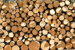 Pila di pini recentemente tagliati Fotografia Stock Libera da Diritti