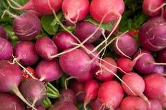 Pila di ravanelli organici freschi Immagine Stock Libera da Diritti