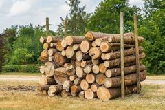 Pila di tronchi di pino in parco olandese immagine stock