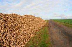 Pila enorme de remolachas, Francia Fotos de archivo