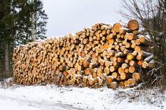 Pila fresca nevada de la madera del corte en el invierno Foto de archivo libre de regalías