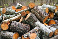Pila grande de leña Pila grande de leña para la chimenea troncos de árbol aserrados álamo temblón rojo y abedul, llenados en un m Fotografía de archivo