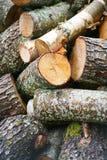 Pila grande de leña Pila grande de leña para la chimenea troncos de árbol aserrados álamo temblón rojo y abedul, llenados en un m Fotos de archivo