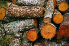 Pila grande de leña Pila grande de leña para la chimenea troncos de árbol aserrados álamo temblón rojo y abedul, llenados en un m Imagen de archivo