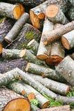 Pila grande de leña Pila grande de leña para la chimenea álamo temblón rojo aserrado de los troncos de árbol llenado en un montón Imagen de archivo