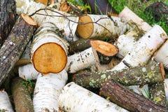 Pila grande de leña Pila grande de leña para la chimenea troncos de árbol aserrados álamo temblón rojo y abedul, llenados en un m Foto de archivo libre de regalías