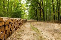 Pila grande de madera en el bosque Imagenes de archivo