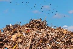 Pila grande de madera en un depósito de la basura Imagen de archivo libre de regalías