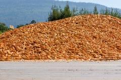 Pila grande de sequedad del maíz Imagenes de archivo