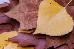 Pila marrón de las hojas de otoño del roble Fotos de archivo