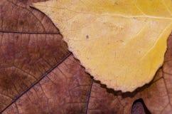 Pila marrón de las hojas de otoño del roble Foto de archivo