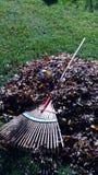 Pila rastrillada colorida de la hoja con el rastrillo Fotografía de archivo