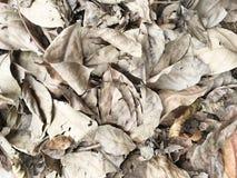 Pila seca de la hoja Foto de archivo