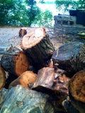 Pila seca de la leña de árboles derribados Imagen de archivo